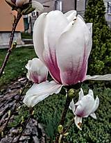 Náhrdelníky - Lapač snov Magnolia - 10678823_