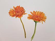 Obrazy - Maľba: Kvet . Gerbera - 10686947_