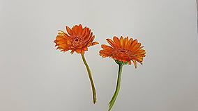 Obrazy - Maľba: Kvet . Gerbera - 10686962_