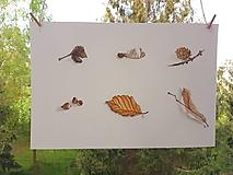 Obrazy - Maľba: Štúdia . prírodniny - 10686979_
