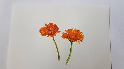 Maľba: Kvet . Gerbera