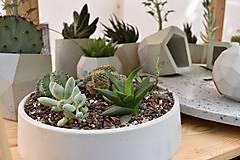 Nádoby - Betónová miska s rastlinkami - 10699834_