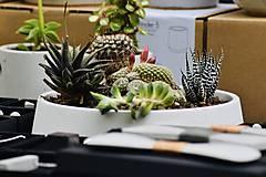 Nádoby - Betónová miska s rastlinkami - 10699835_