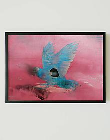 Obrazy - Bird 5 - 10708054_