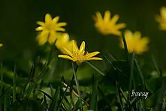 Fotografie - blyskáč cibuľkatý - 10707901_
