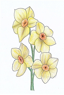 Kresby - Žlté kvietky - 10716902_