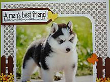 Papiernictvo - Pohľadnica - šteniatko - Sibírsky husky - 10722848_