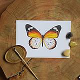 Obrazy - Motýľ - Danaus chrysippus - 10726061_
