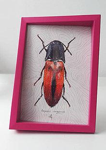 Kresby - Ampedus sanguineus - 10755650_