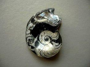 Minerály - Goniatit 43 mm, č.7f - 10757116_