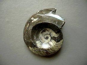 Minerály - Goniatit 44 mm, č.11f - 10757138_