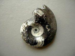 Minerály - Goniatit 46 mm, č.13f - 10757148_