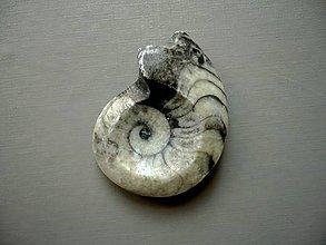 Minerály - Goniatit 39 mm, č.15f - 10757154_