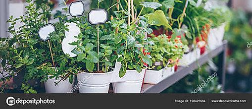 Nezaradené - sušené bylinky na čaj - 10760743_