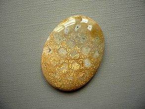 Minerály - Kabošon - fosilní korál 37 mm, č.68f - 10762715_