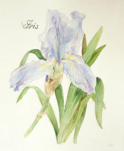 Obraz Kosatec (Iris)