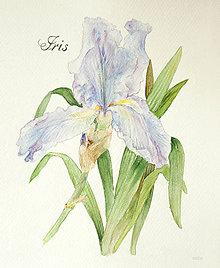 Obrazy - Obraz Kosatec (Iris) print A4 - 10769625_