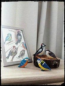 Kresby - Plagát Vtáky - 10771199_