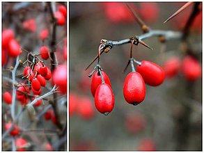 Fotografie - Zimná - 10780662_