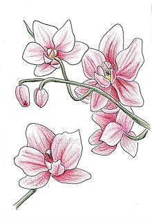 Kresby - Kvietky (ružové) - 10789031_