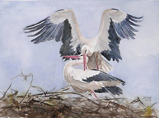 Bocianí pár  - akvarel