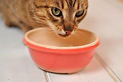 Pre zvieratká - Miska pre mačky - 10806024_
