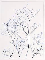 Obrazy - Reprodukcia akvarelu - Gypsomilka - 10815796_