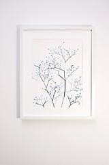 Obrazy - Reprodukcia akvarelu - Gypsomilka - 10815798_