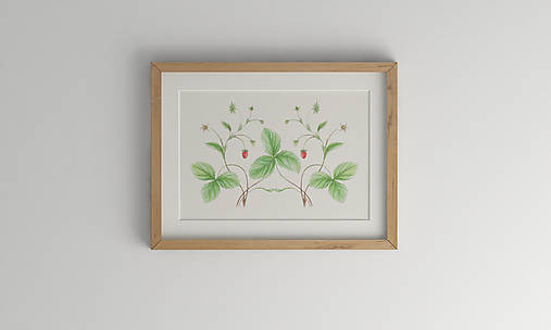 Akvarelový art print| botanická ilustrácia Jahoda lesná