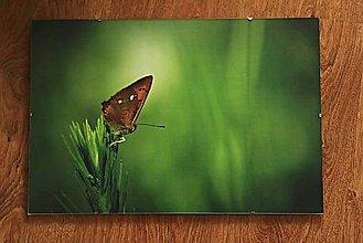 Fotografie - motýlia - 10828710_