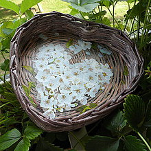 Košíky - Košík-srdiečko  (čerešňové kvety) - 10841618_