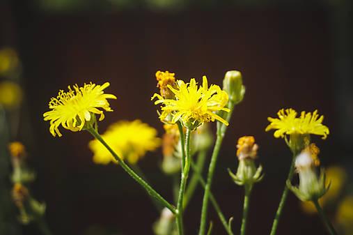 Malé žlté slniečka