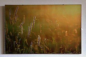 Fotografie - v tráve - 10852913_