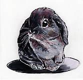 Obrazy - Baby bunny - 10859207_
