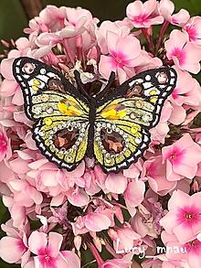 Odznaky/Brošne - Brošnička motýľ žlto-hnedý :) - 10859674_