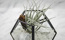 Nádoby - Vitrážové rastlinné terárium s tillandsiou - 10875585_