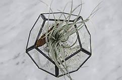Nádoby - Vitrážové rastlinné terárium s tillandsiou - 10875586_