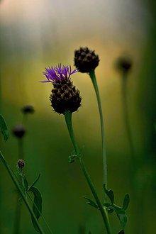 Fotografie - v tráve - 10881751_