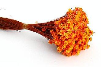 Dekorácie - Sušené kvety Glixia temporona oranžová - 10885230_