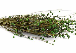 Suroviny - Sušený Len zelený - 10885381_