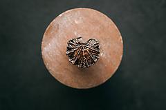 Prstene - Muškát prsteň - 10949595_