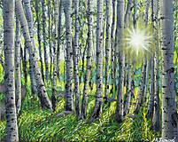 Obrazy - Východ slnka v brezovom lese - 10954269_