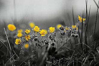 Obrázky - Nový život : žlto - čierna - 10969285_