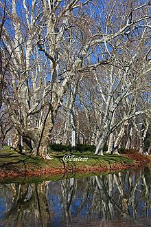 Fotografie - V-Fotografia... Staré stromy, vzácne stromy - 10976981_