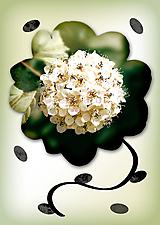 Grafika - Kvety v kvete - 10975691_