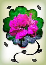 Grafika - Kvety v kvete - 10975693_