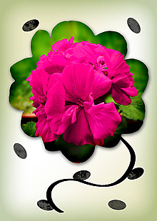 Grafika - Kvety v kvete (malinové opojenie) - 10975689_