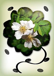 Grafika - Kvety v kvete (nevinné) - 10975699_