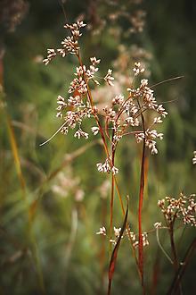 Fotografie - Ako rastie tráva - 10978190_