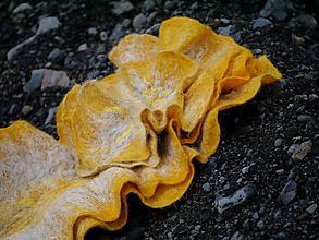 Šály - Romantický vlnený šál s kvetom - 10980748_